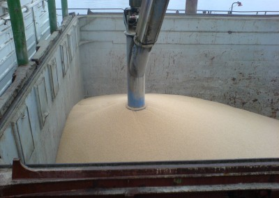 LITTLE STAR loading Wheat in Bremen